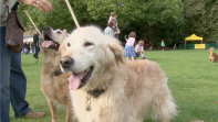 Chiswick House Dog Show 2013