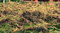 Mystery Intruder in Chiswick Garden