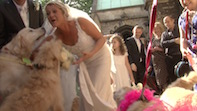 Chiswick's Fairy Dog Mother Gets Married