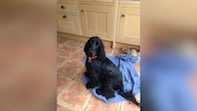 Local Dentist Mike Clarke Still Seeking Lost Dog Bertie