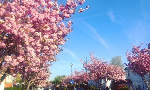 New Chiswick Blossom Day Planned For April