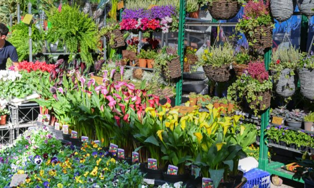 Chiswick Flower Market to go ahead in November