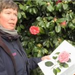 On The Trail Of Chiswick House Camellia Show